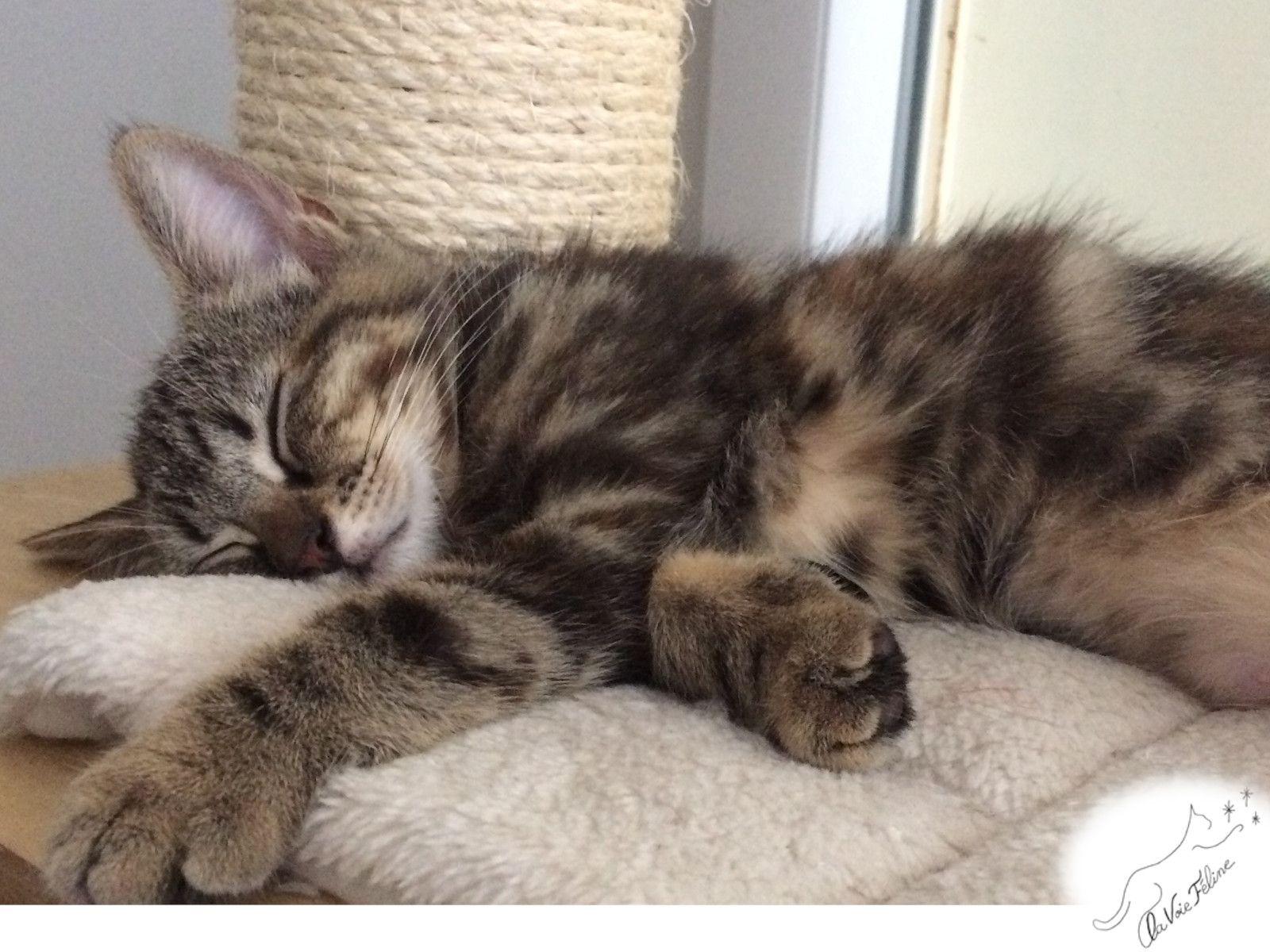 Rey et Nomi - Adopter un chat – Ile de France