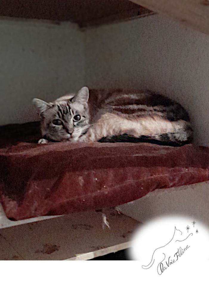 Saphir - Adopter un chat – Ile de France
