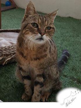 Voyou - Adopter un chat – Ile de France